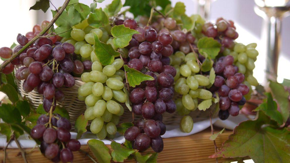 Vynuogės: nauda sveikatai, maistinės savybės bei skanūs receptai