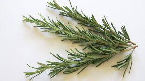 Rozmarinas nauda sveikatai, grožiui, panaudojimo būdai ir skanio rozmarinų arbatos receptas